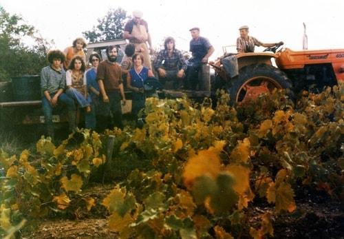 Photo vignes de Corcoué