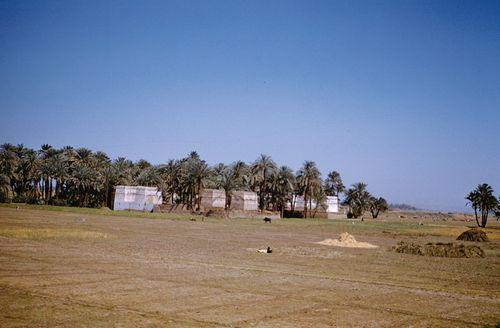 Campagne  et palmeraie - Egypte